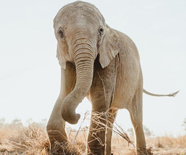 Das ZEN-Projekt: Lösungen für einzelne Tiere, Wildtierpopulationen, Lebensräume und lokale Gemeinden