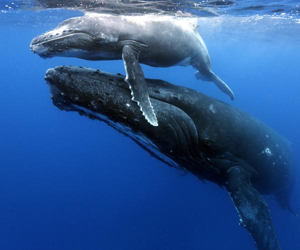 Campagne Verdubbel je gift: verdubbel je bijdrage voor dieren over de hele wereld