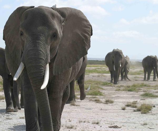 Leboncoin rejoint la coalition mondiale contre le trafic de faune sauvage en ligne