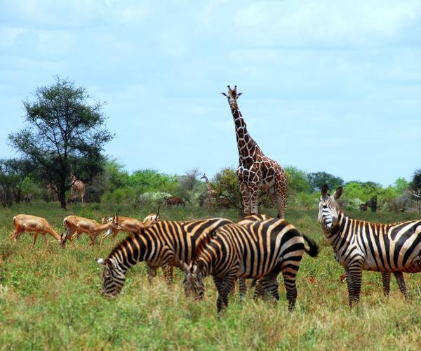 Cruciale maatregelen op tafel om bedreigde diersoorten te redden tijdens 18e conferentie van CITES