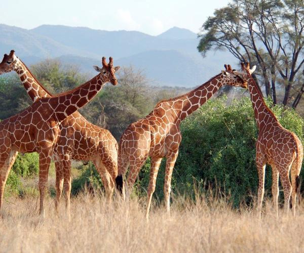 Artenschutzkonferenz: Es geht ums Überleben – Schutz dringend notwendig
