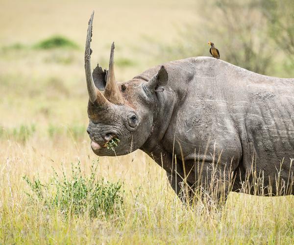 Op CITES-conferentie genomen besluiten, kunnen van invloed zijn op overleving van bedreigde soorten
