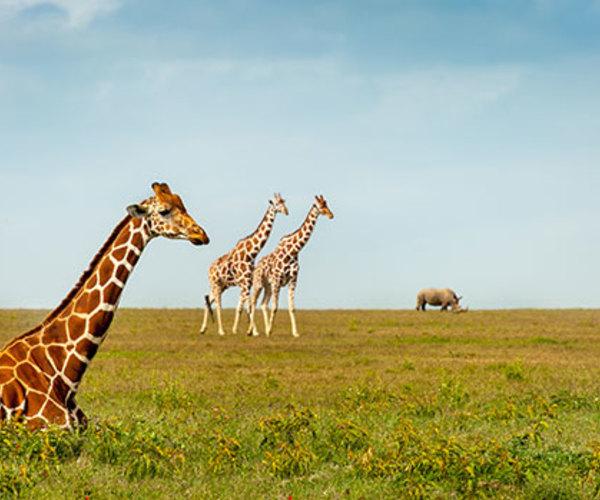 Des mesures de conservation essentielles pour les espèces menacées sont à l'ordre du jour alors que les délégués se réunissent pour la 18è conférence de la CITES