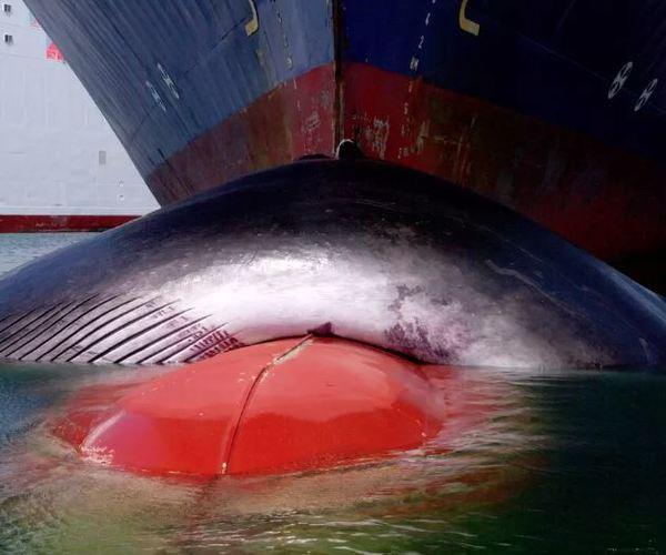Ralentir les navires est bénéfique pour le climat, les baleines et l'écosystème marin