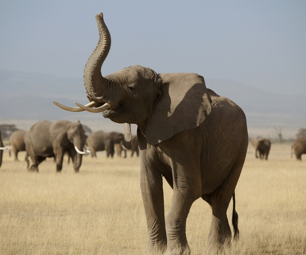 Governments urged to act on domestic ivory markets