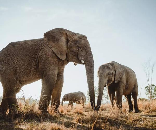 Artenschutzkonferenz: Keine Erlaubnis für internationalen Elfenbeinhandel