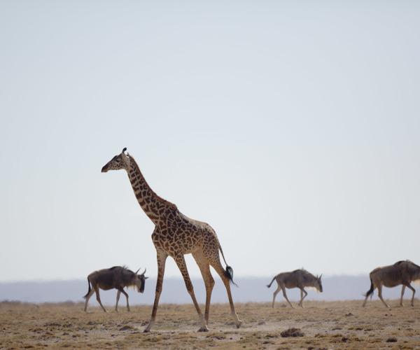 Wichtige Erfolge zum Schutz gefährdeter Arten bei weltgrößter Konferenz zum Wildtierhandel