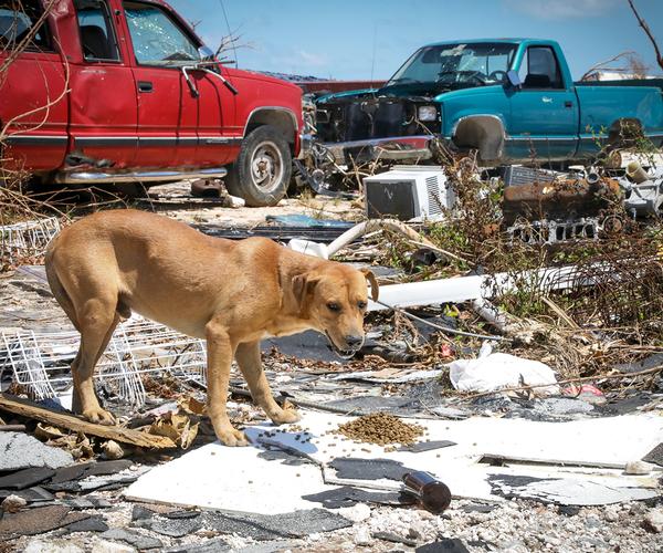 Disaster Alert: Hurricane Dorian hits the Bahamas