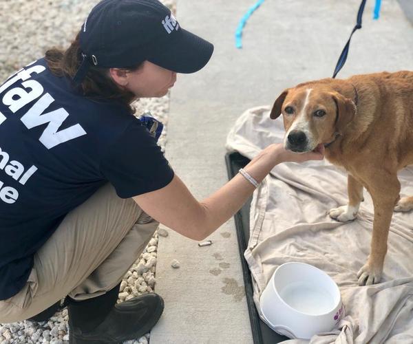 Tierrettungsteam des IFAW auf den Bahamas im Einsatz