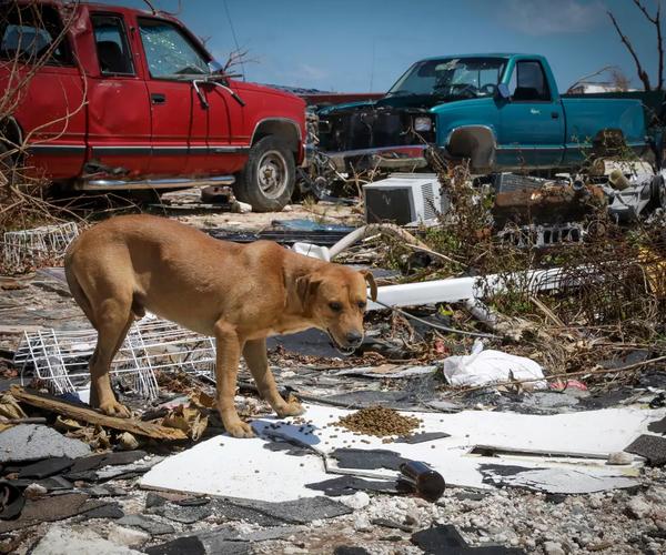 Katastrophenhilfe: Hurrikan Dorian wütete auf den Bahamas