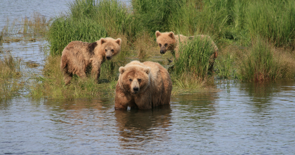 National Park Service to allow brutal hunting methods on Alaska's national preserves