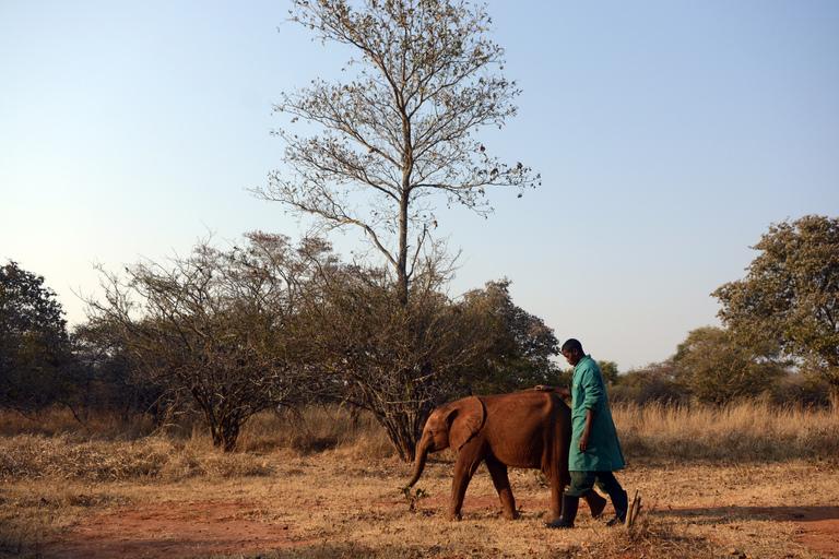 Elephant Orphanage Project - Zambia | IFAW
