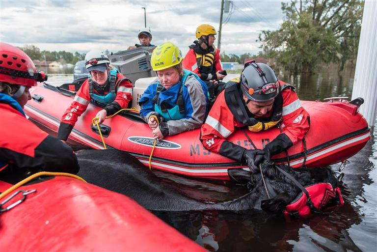 Disaster Relief Programs | IFAW