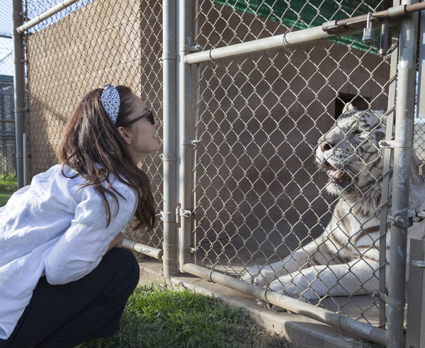 Visiting a true sanctuary for big cats