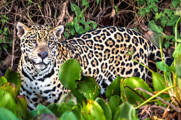 Urgent measures to protect threatened species on the table as delegates gather for 13th CMS conference