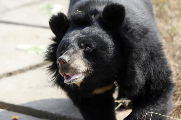 Een vaccin tegen pandemieën: stop de handel in wilde dieren voor welk doel dan ook