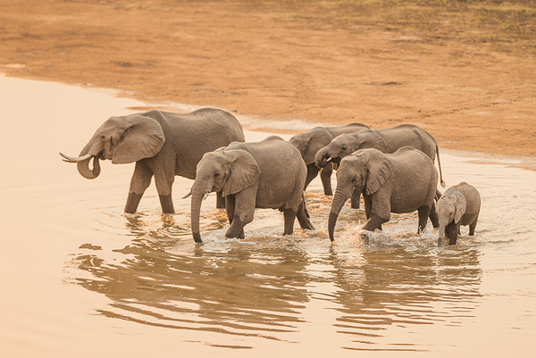 the court of appeal upholds the ivory act