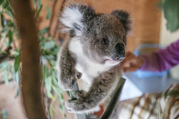 Unterstützung von Partnern und Wildtierpflegern in Australien zu Zeiten der COVID-19-Pandemie