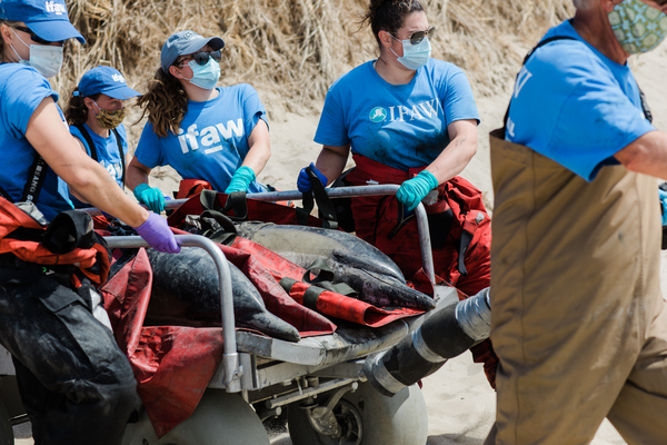 a rescue story unlike any other: responding to a 45-dolphin mass stranding event