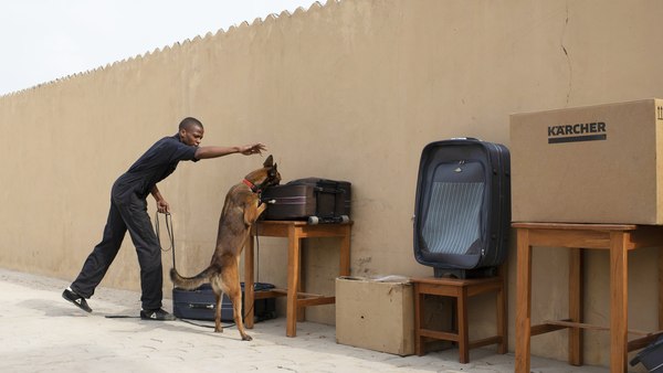 eerste hondenbrigades in Benin door ifaw opgeleid