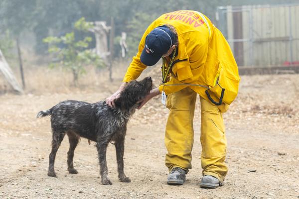 Das IFAW Katastrophenhilfeteam im Einsatz bei den Bränden in Kalifornien