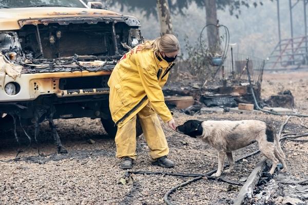 ifaw se déploie sur l'incendie North Complex pour soutenir le sauvetage des animaux