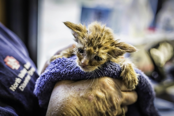 kitten rescued from California wildfires is named Baby Yoda