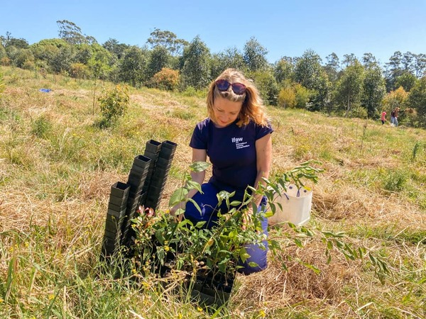 rebuild koala habitat