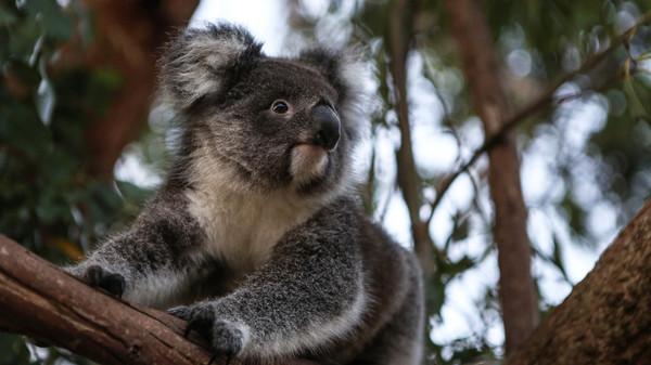 Ein Jahr nach den verheerenden Buschbränden in Australien 2019/2020