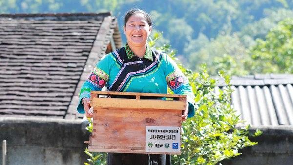 Bienenzüchterinnen in China schützen Elefantenpopulation