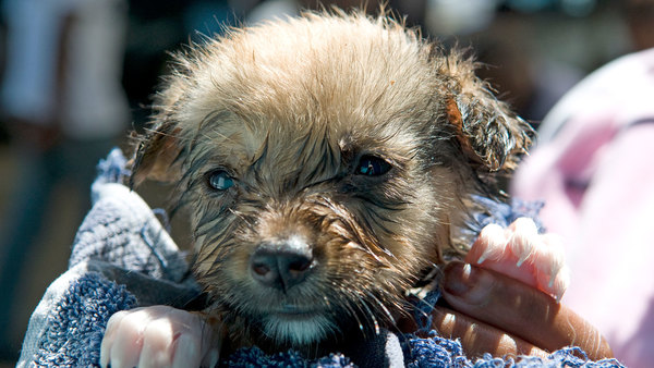 fight against animal cruelty gains ground with tougher sentencing set to be introduced