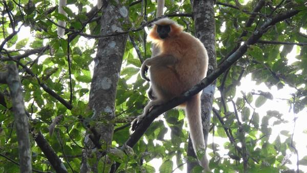 UNESCO Welterbe Nationalpark in Indien wird erweitert