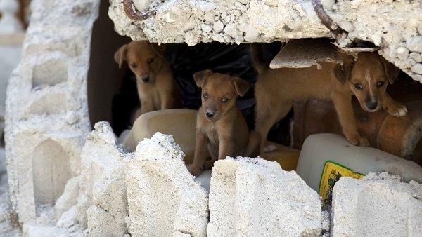 ifaw provides support to Haiti following 7.2 magnitude earthquake