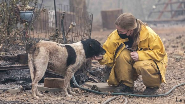 National Preparedness Month: create an emergency plan that includes your pets