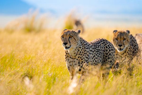 lancement d'une charte de la photographie animalière