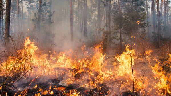 how wildfires impact wildlife