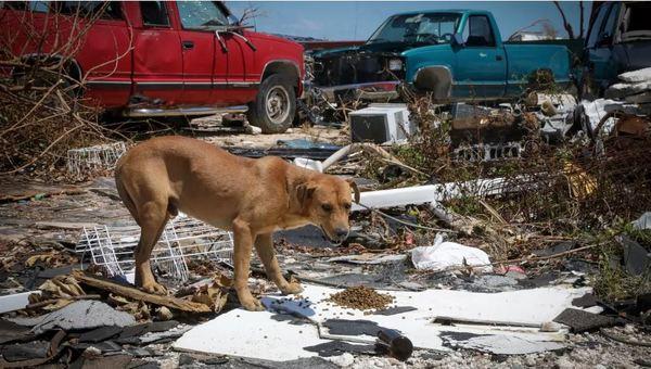 Catastrophe naturelle : L'ouragan Dorian a frappé les Bahamas