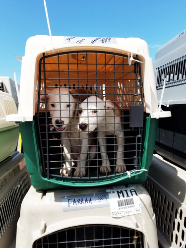 IFAW helps transport animal survivors of Hurricane Dorian to the US to find new homes