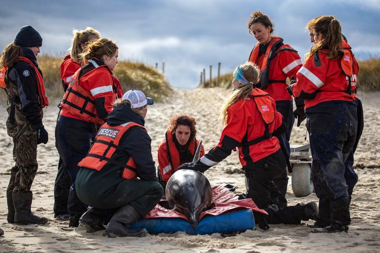 la moitié meilleur en ligne date de sortie Stranded Marine Mammal Rescue and Research - Global   IFAW