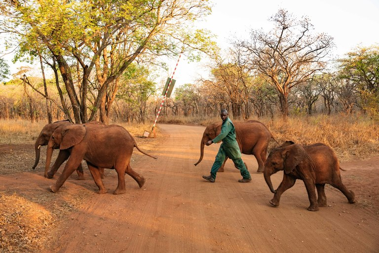 The pursuit of happiness: Protecting animals to improve our well-being |  IFAW