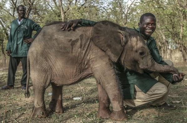 Ein Tag im Leben des Elefanten Nania im Nationalpark Deux Balés
