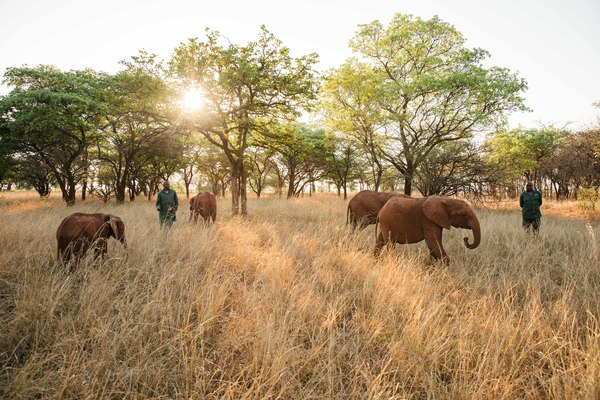 Sinking Ship Entertainment launches elephant conservation campaign with International Fund for Animal Welfare