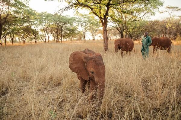 Wie kann ich den Elefanten helfen?! (Gesa Neitzel - Wonderful Wild)